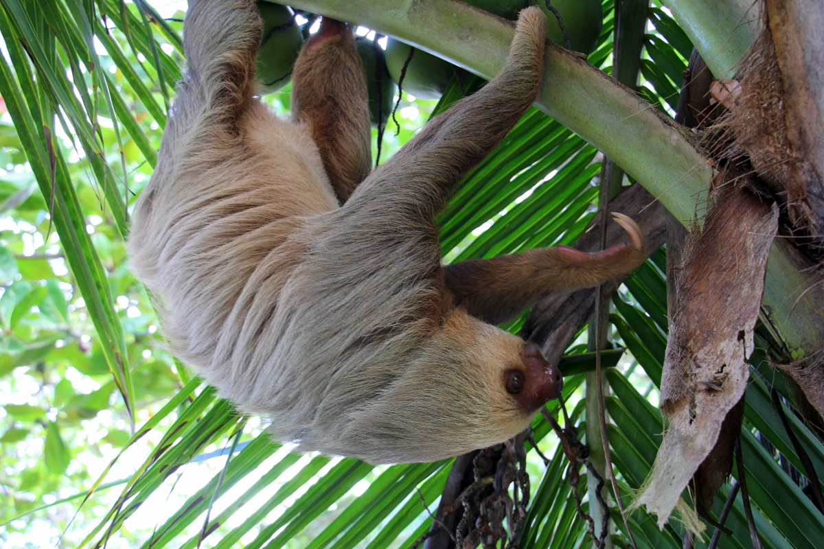 Sloth At The Campsite